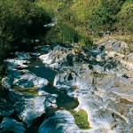 ambiente ripariale a Gravà