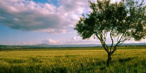 Passeggiata a Cugno Carrube alla scoperta delle piante aromatiche e delle erbe medicamentose