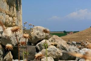 alfio-antico-tamburo-articolo-5