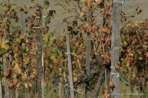 etna-vino-chiara-vigo-0472