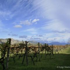 Il vino delle Fattorie Romeo del Castello: il sogno di Chiara Vigo.